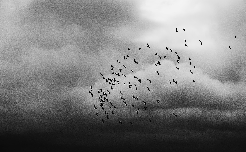 Hårda, mjuka vingslag och varsamma händer